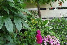 Hagen min - my garden