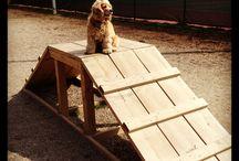 doggy play