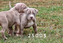 Pups for sale