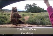 funny animals on film
