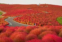 Photo of the Day: Hitachi Seaside Park