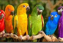 Birds of a feather... / by Tina Fichtel