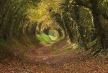 Photo Pathways