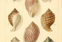 shell、Sea creatures