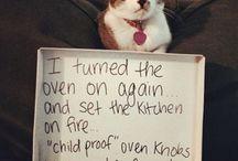 Cat - Dog shaming
