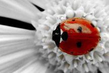pillangók és egyéb állatfajták