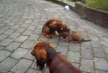 Gravhunde
