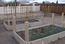 Garden Beds / by Tina Murphy