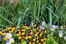 Gardening and Garden Art / by Donna Johnson