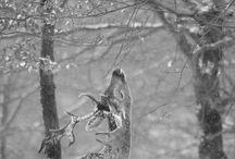 Ohhh Deer!
