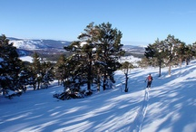 Winter in the Cairngorms / Let it snow!