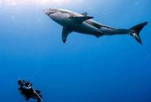 dream diving