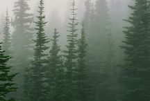 Forest | Nature