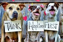 Adoptable Dogs / Add a four legged friend to your family!