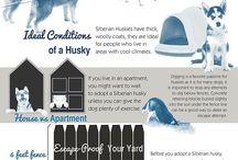 Husky care
