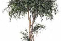Les Eucalyptus Stabilisés / Découvrez les Eucalyptus stabilisés que propose Nature-Stabilisée. La magie des plantes stabilisées réside dans le fait que ce sont des plantes naturelles et qu'elles ne nécessitent aucun entretien. Plus d'infos sur notre site internet
