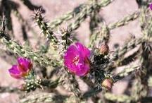 Spring in Santa Fe