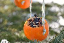 madáretető- bird feeder