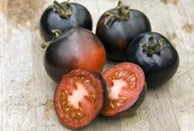 Tomato-Plants-Direct / Tomato-Plants-Direct is our new website you can visit us here http://www.tomato-plants-direct.co.uk/