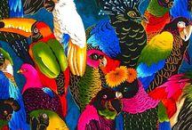 les oiseaux de passage