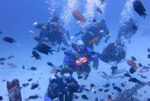 Diving In Puerto Galera