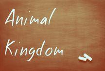 Animal Kingdom / by Paula Mendez