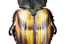 Maravellosos insectes