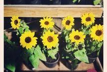 Pela Lente das Flores - Primavera Garden / Nossas flores, vistas pelos olhos dos visitantes, parecem ainda mais lindas! Confira as imagens compartilhadas no Pinpic. #primaveragarden #plantas #flores #garden #jardim