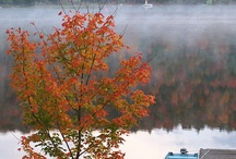 Fall - my favorite time of year / by Sharon Franks