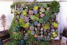For the love of garden