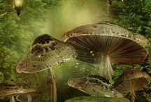 Of Magick and Faeries