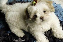Mi perro / Amo muito