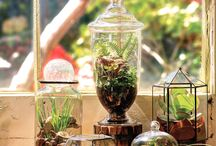 Terrariums / by Michelle Boyer