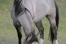 HORSES / by Kandi Ausmus