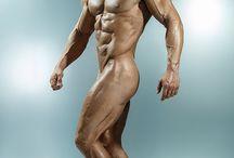 Anatomia - Masculina