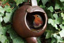 Birds: DIY birdhouses