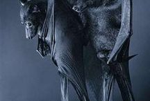 Bats and other creatures that I love / by Erin Sochocky