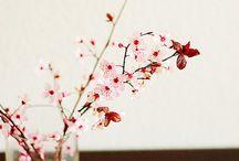 Beauty Simple / Flowers