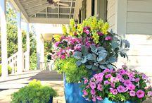 House flower ideas