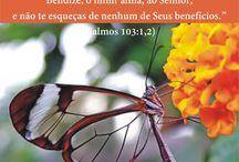 Série Seja Livre / A Palavra de Deus liberta!