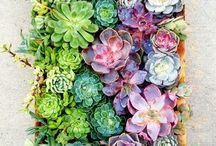Plantitas bonitas ☘️