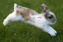 Awwww cute bunnies!!! / Wonderful pictures of some pretty darn cute bunnies!