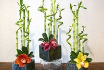 kathleens lucky plants