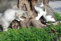 cats&love