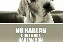 No al maltrato / Ayúdenle a defender a los animales !!