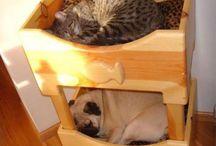 kedi köpek evi