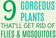 get rid of mosquitos