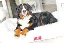 Dog Bed / We offer high quality dog beds!   ●https://e-doggy.com/ ●https://www.facebook.com/edoggycom/ ●https://www.instagram.com/edoggy_beds/