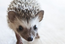 Animals / Cuter than the cutest!