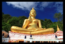 Phuket / Discover the many wonders of Phuket Island, places everyone knows and some hidden ones!  / by Phuket 101